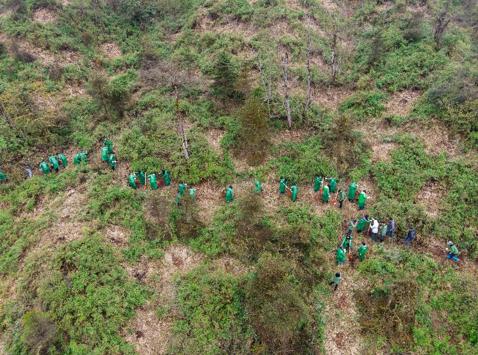 各方代表亲手参与种植本土树种
