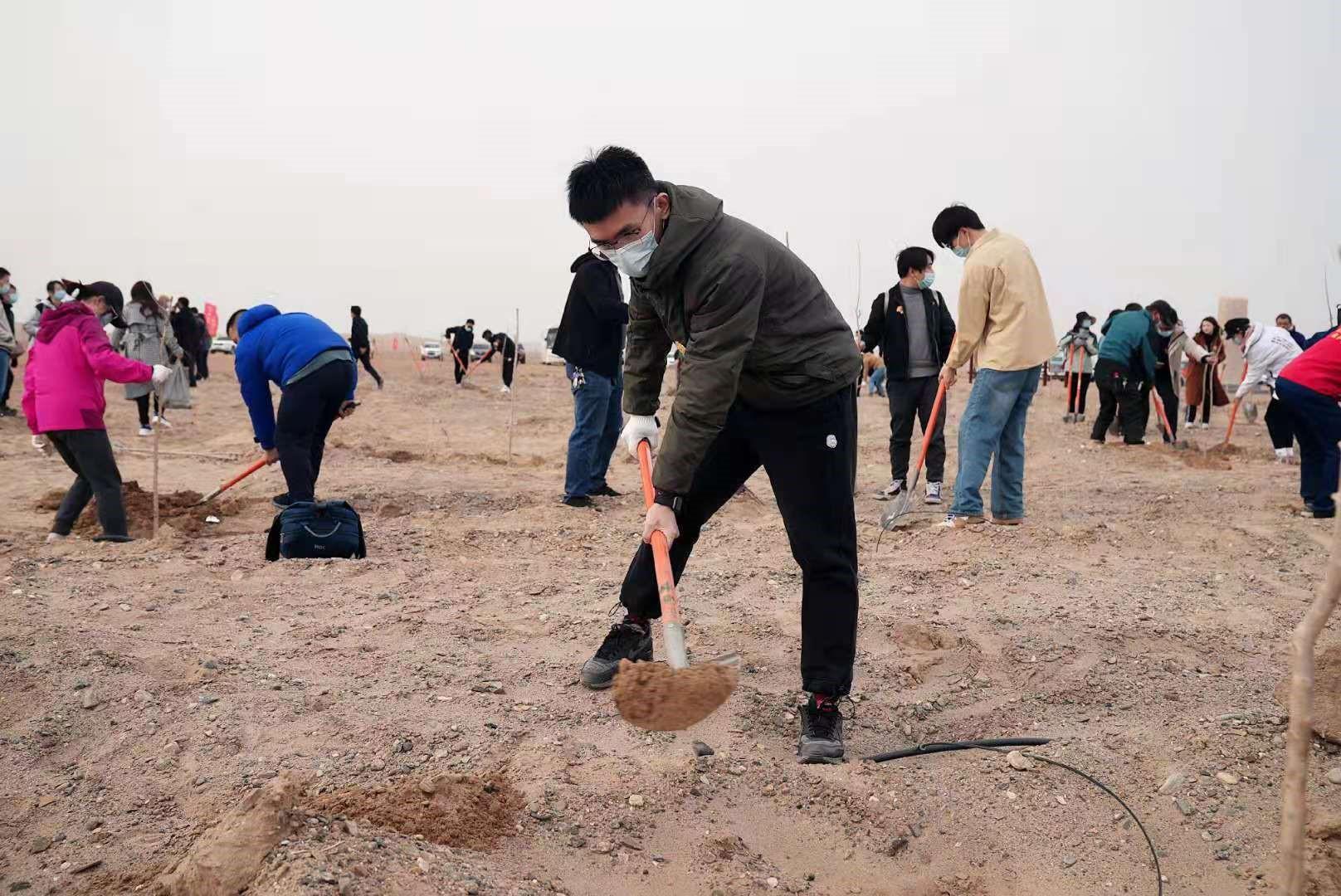 志愿者们在春种现场种植胡杨幼苗
